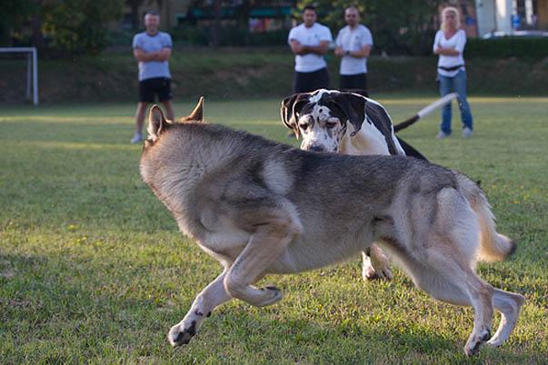 i classi di socializzazione per cani