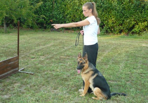 corso di addestramento per cani