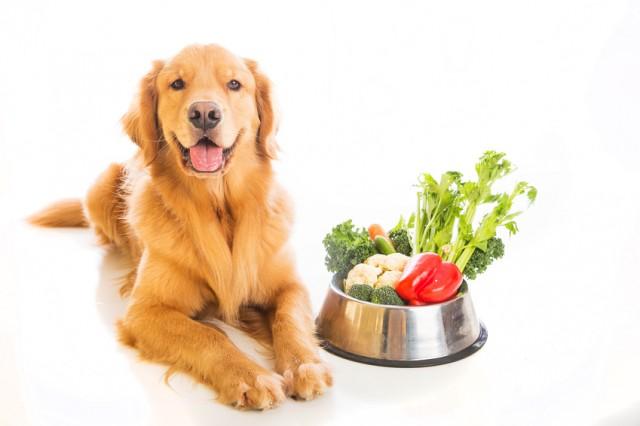 dieta vegana nel cane1