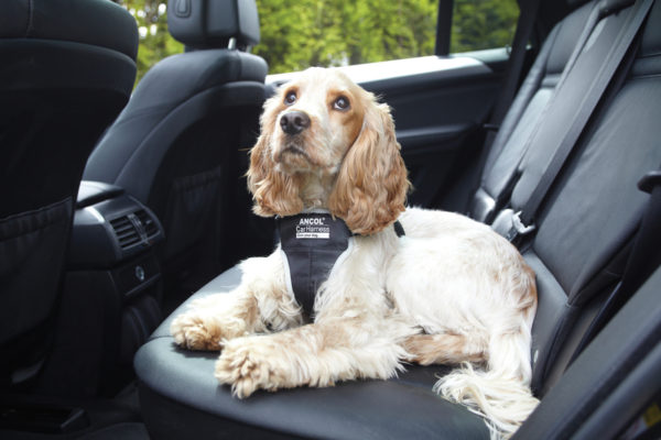 Risultati immagini per cani spaventati in macchina