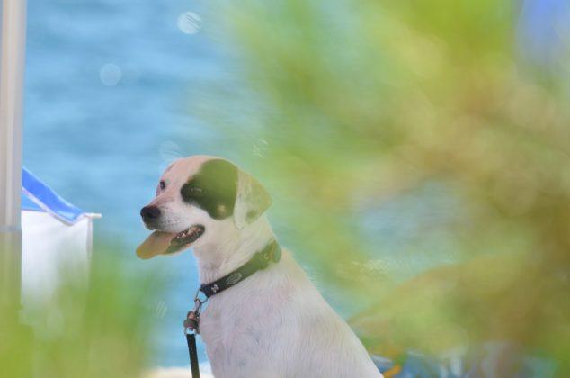 spiaggia per cani2