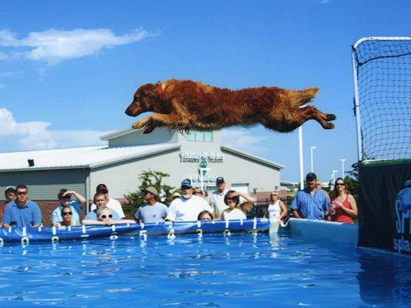 splash dog