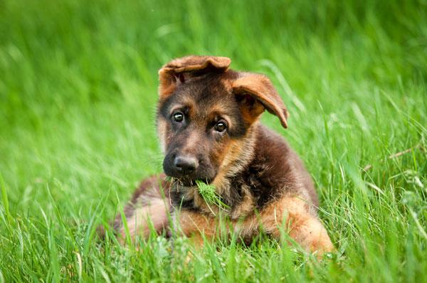 vaccinazioni del cucciolo
