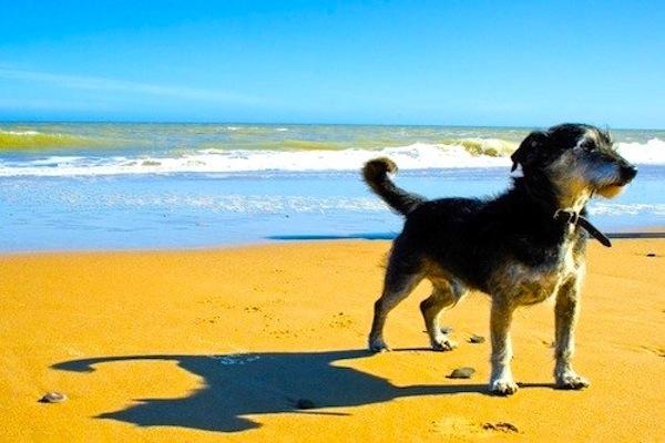 cane beve l'acqua del mare