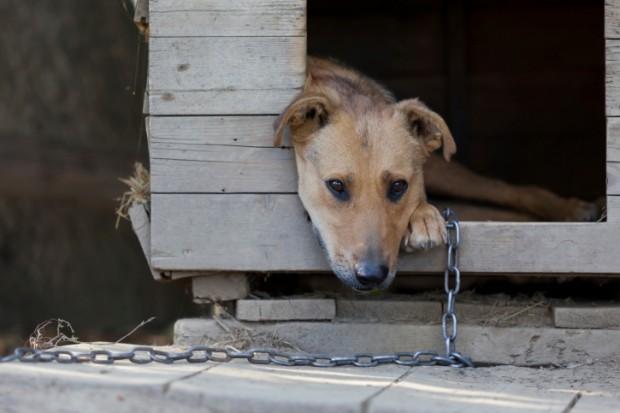 cani legati a catena