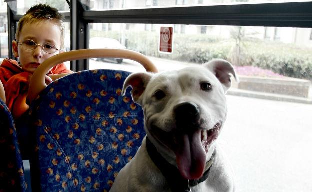 cani sugli autobus
