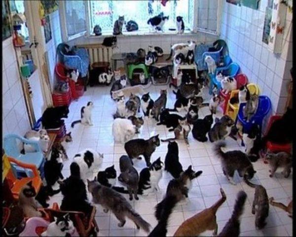 50 cani e 20 gatti