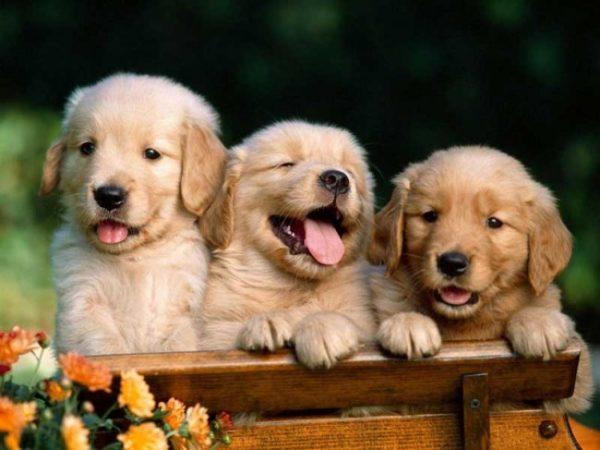 svezzamento dei cani