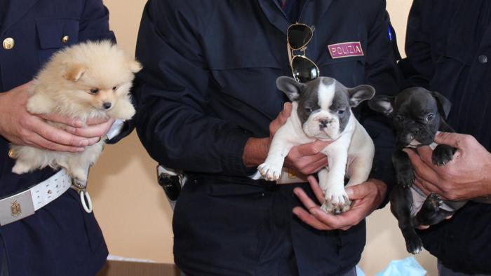 tre cuccioli salvati