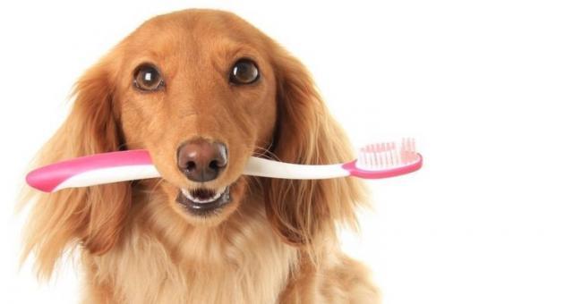 mal di denti nel cane