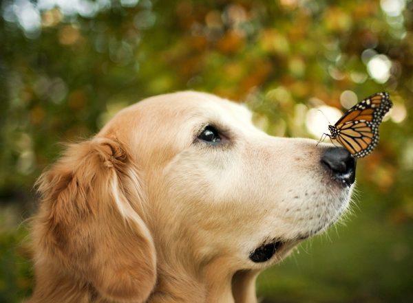 Naso asciutto nel cane
