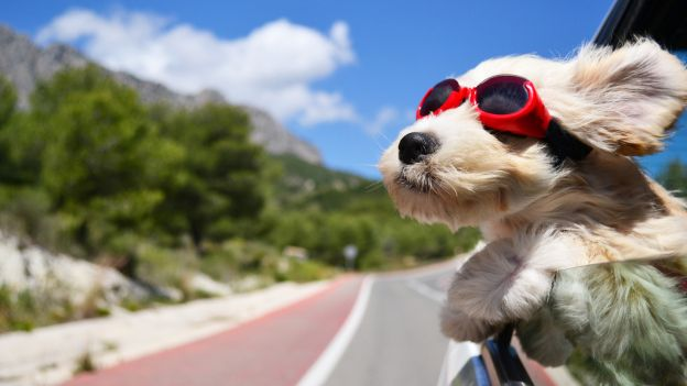portare-i-cani-allestero