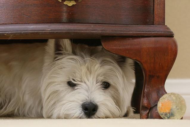 paura dei botti nei cani