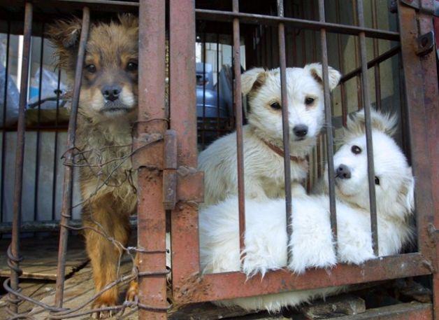 Tg Cinofilo Massa Carrara Sequestrati Tre Cani Erano Maltrattati