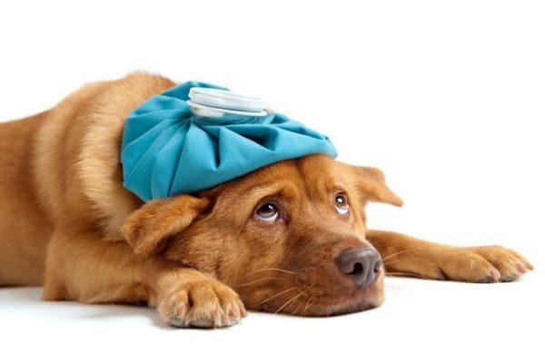 polmonite-nel-cane