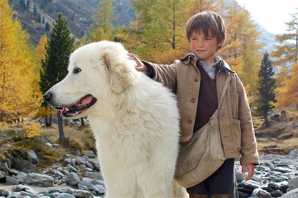 cane da montagna dei pirenei-3