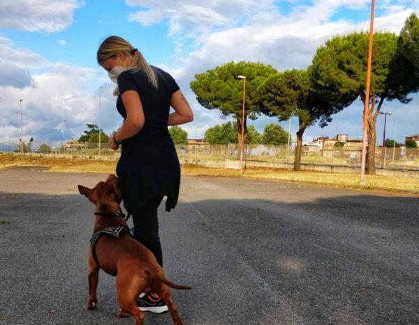 perchè il cane non vuole camminare