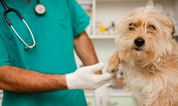 veterinario 24 ore