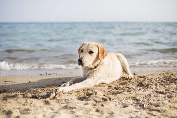 cani in spiaggia-2