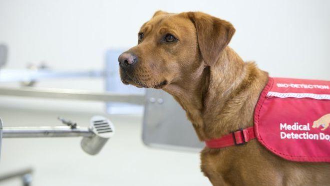 i cani fiutano il coronavirus -2