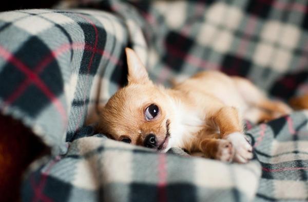 Come insegnare al cucciolo a fare i bisogni fuori -2