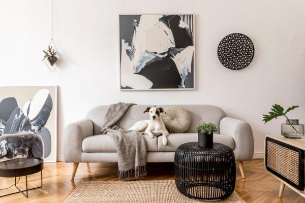 Cane in giardino o in appartamento consigli e come proteggerlo -2